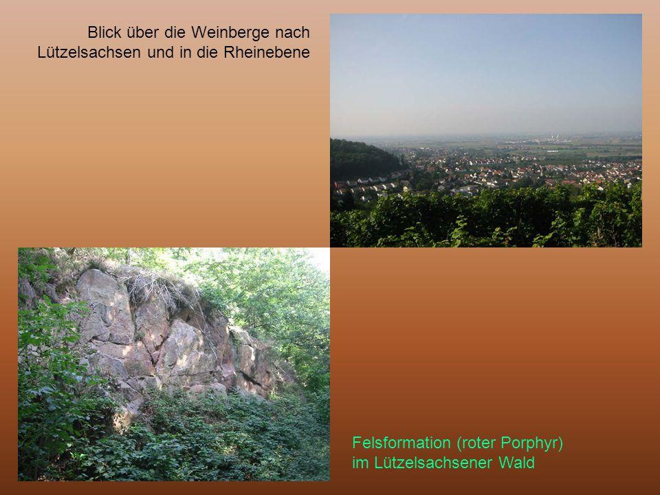 Blick über die Weinberge nach Lützelsachsen und in die Rheinebene Felsformation (roter Porphyr) im Lützelsachsener Wald
