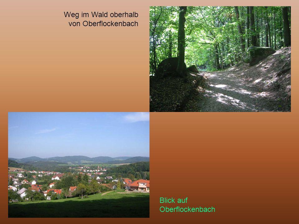 Weg im Wald oberhalb von Oberflockenbach Blick auf Oberflockenbach