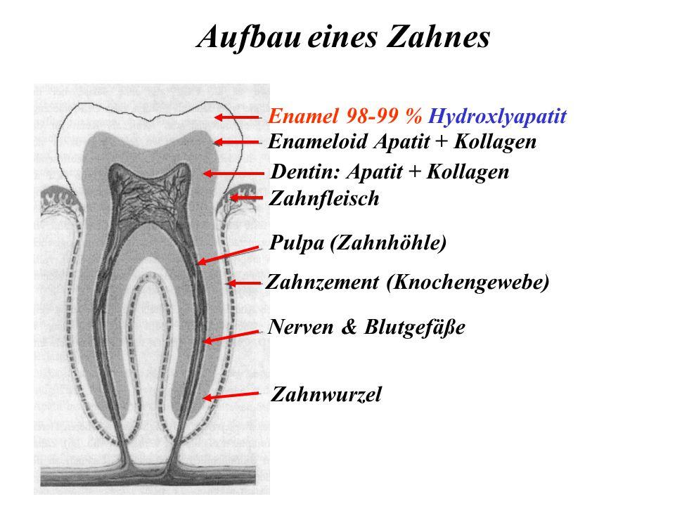 Enamel 98-99 % Hydroxlyapatit Enameloid Apatit + Kollagen Dentin: Apatit + Kollagen Nerven & Blutgefäße Zahnwurzel Zahnzement (Knochengewebe) Zahnfleisch Pulpa (Zahnhöhle) Aufbau eines Zahnes
