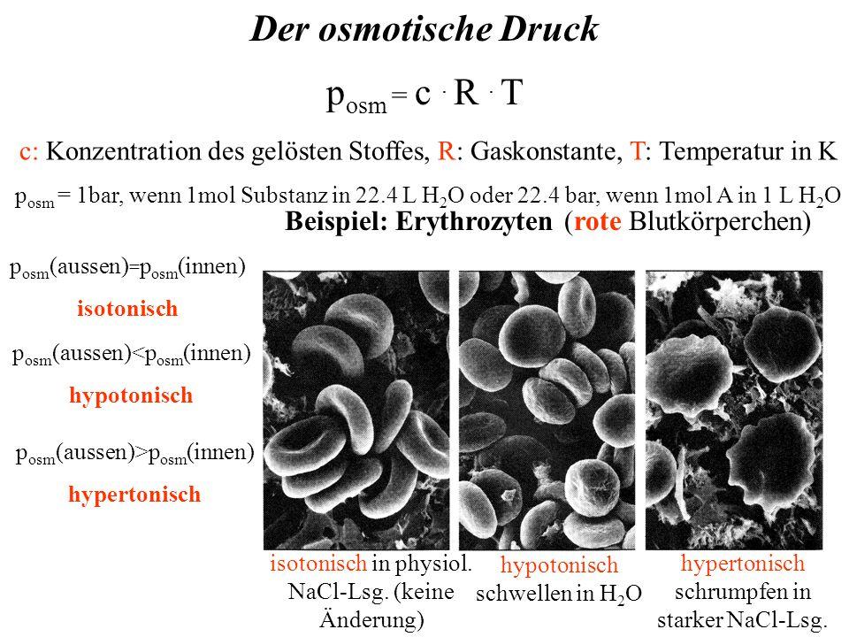 Der osmotische Druck p osm = c. R. T hypertonisch schrumpfen in starker NaCl-Lsg.