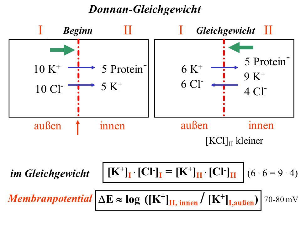 10 K + 10 Cl - semipermeable Membran für Protein undurchlässig außeninnen 5 Protein - 5 K + Donnan-Gleichgewicht Beginn III Membranpotential  E  log ([K + ] II, innen / [K + ] I,außen ) 70-80 mV III außeninnen 6 K + 6 Cl - 4 Cl - 5 Protein - 9 K + [KCl] II kleiner Gleichgewicht im Gleichgewicht [K + ] I.