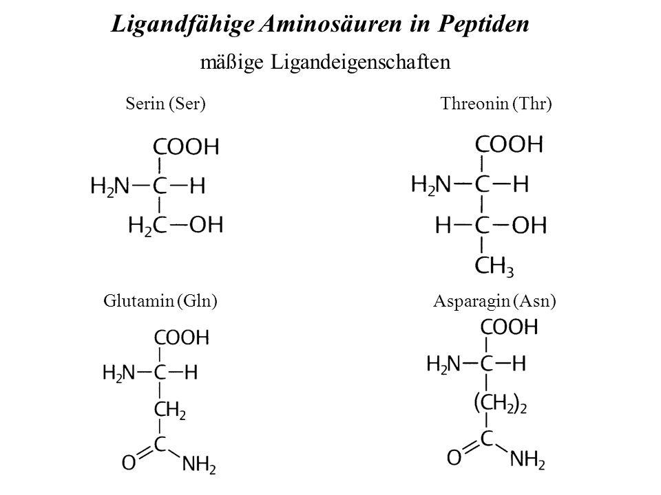 Ligandfähige Aminosäuren in Peptiden mäßige Ligandeigenschaften Serin (Ser)Threonin (Thr) Glutamin (Gln) Asparagin (Asn)