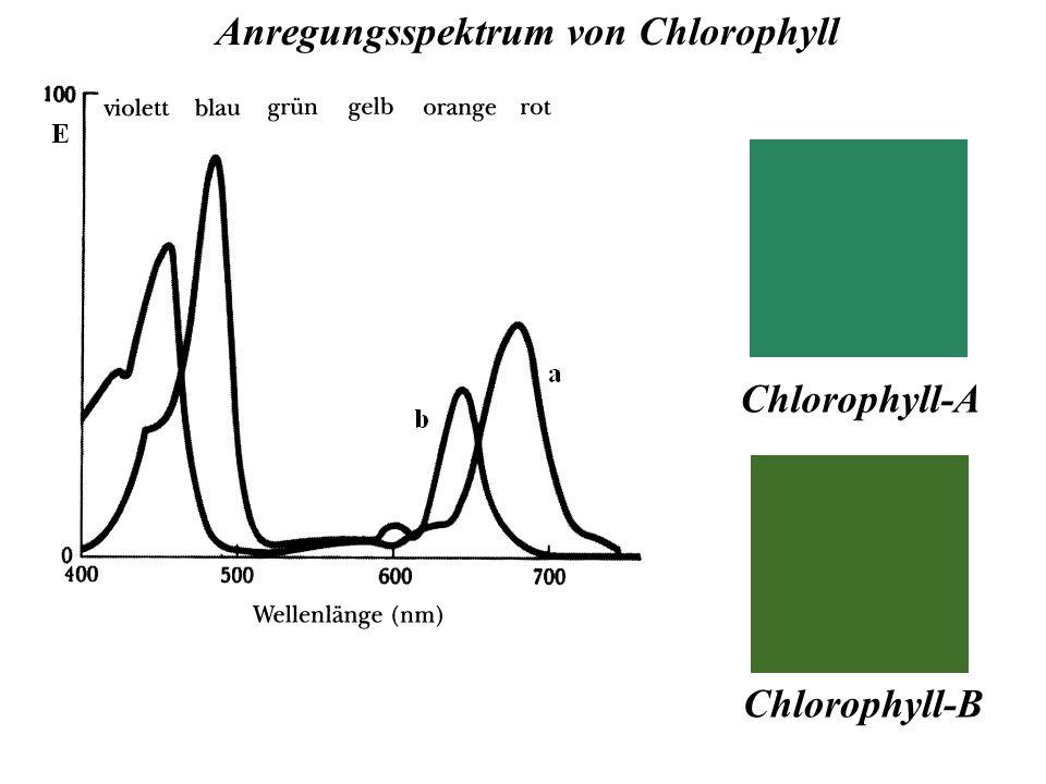 Anregungsspektrum von Chlorophyll Chlorophyll-B Chlorophyll-A