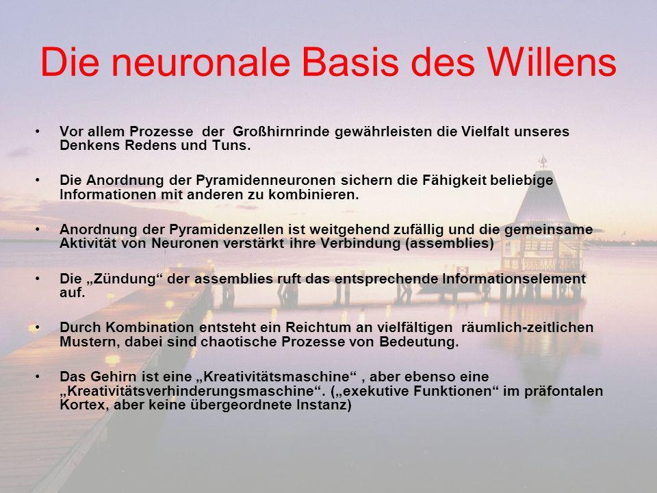 Die neuronale Basis des Willens Vor allem Prozesse der Großhirnrinde gewährleisten die Vielfalt unseres Denkens Redens und Tuns. Die Anordnung der Pyr