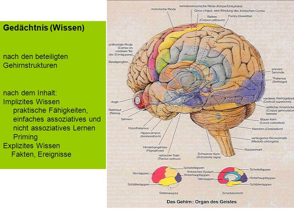 Im Gehirn haben viele Fähigkeiten ihren Ort Gedächtnis (Wissen) nach den beteiligten Gehirnstrukturen nach dem Inhalt: Implizites Wissen praktische Fä