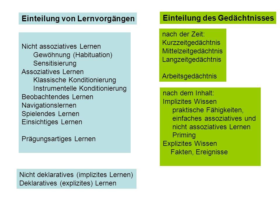 Nicht assoziatives Lernen Gewöhnung (Habituation) Sensitisierung Assoziatives Lernen Klassische Konditionierung Instrumentelle Konditionierung Beobach