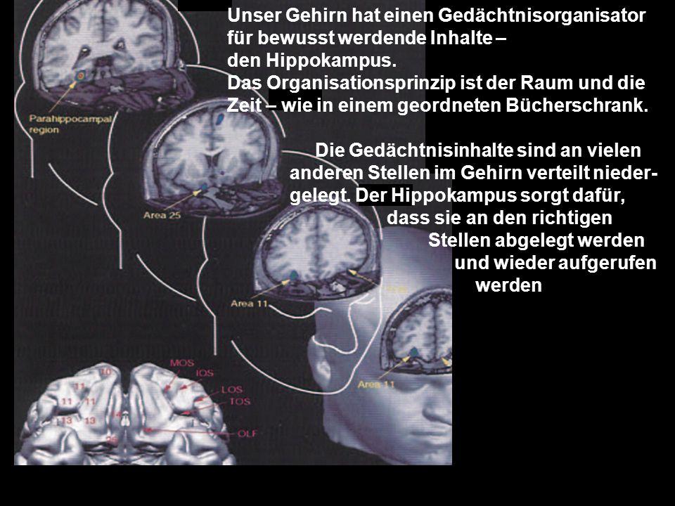 Unser Gehirn hat einen Gedächtnisorganisator für bewusst werdende Inhalte – den Hippokampus. Das Organisationsprinzip ist der Raum und die Zeit – wie