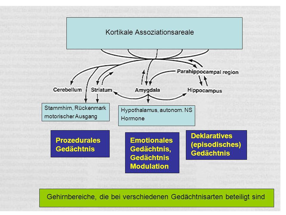 Kortikale Assoziationsareale Stammhirn, Rückenmark motorischer Ausgang Hypothalamus, autonom. NS Hormone Prozedurales Gedächtnis Emotionales Gedächtni