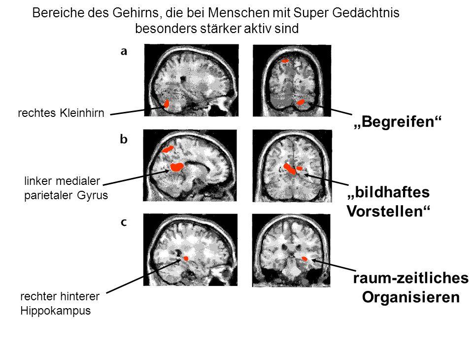 Bereiche des Gehirns, die bei Menschen mit Super Gedächtnis besonders stärker aktiv sind rechtes Kleinhirn linker medialer parietaler Gyrus rechter hi