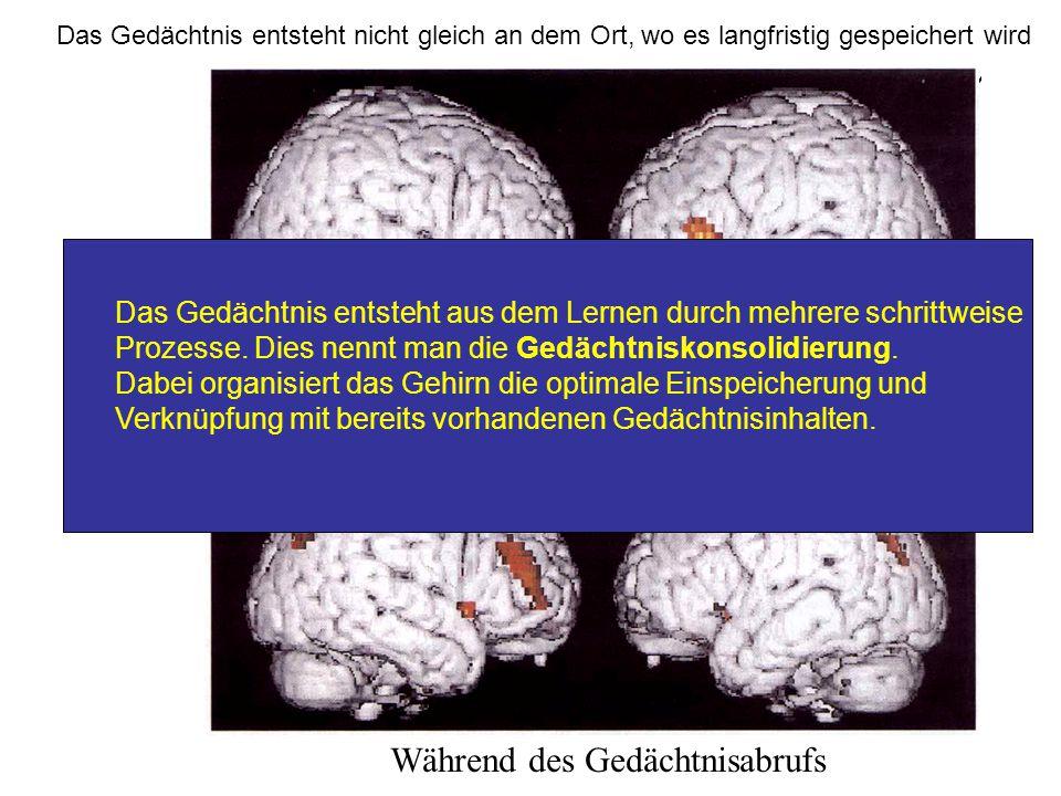 Activity during memory Aktivität während der Gedächtnisbildung Während des Gedächtnisabrufs Das Gedächtnis entsteht nicht gleich an dem Ort, wo es lan