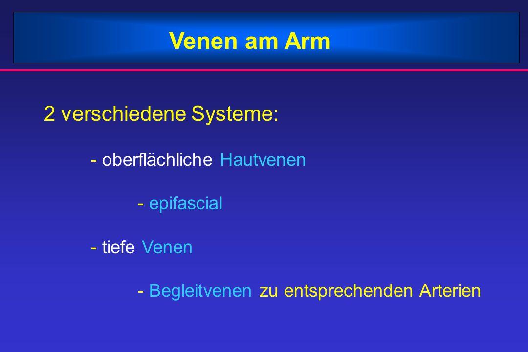 Venen am Arm 2 verschiedene Systeme: - oberflächliche Hautvenen - epifascial - tiefe Venen - Begleitvenen zu entsprechenden Arterien