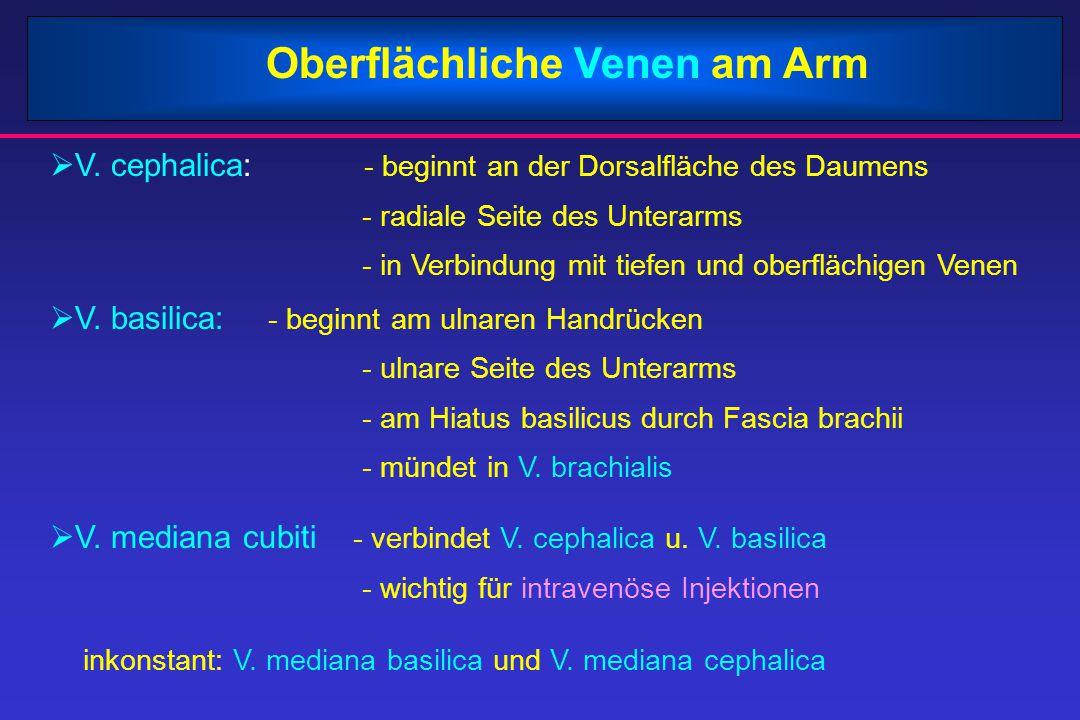 Oberflächliche Venen am Arm  V. cephalica: - beginnt an der Dorsalfläche des Daumens - radiale Seite des Unterarms - in Verbindung mit tiefen und obe