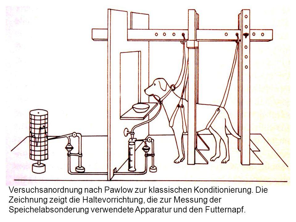 Versuchsanordnung nach Pawlow zur klassischen Konditionierung. Die Zeichnung zeigt die Haltevorrichtung, die zur Messung der Speichelabsonderung verwe