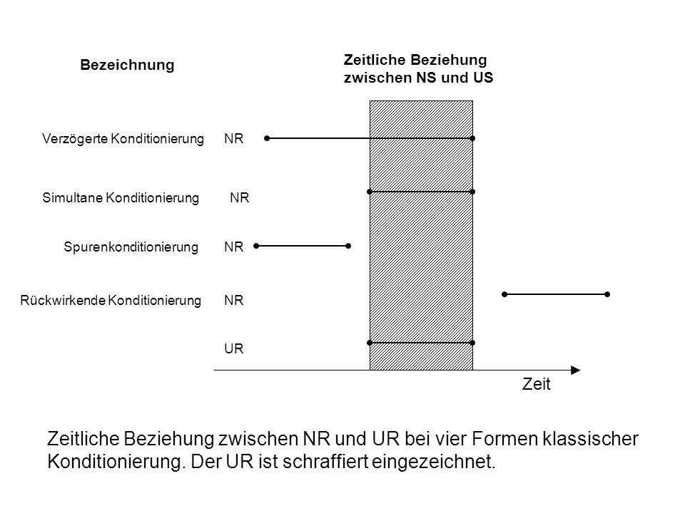 Klassische Konditionierung Pawlow: Speichelsekretion bei Hunden  3.