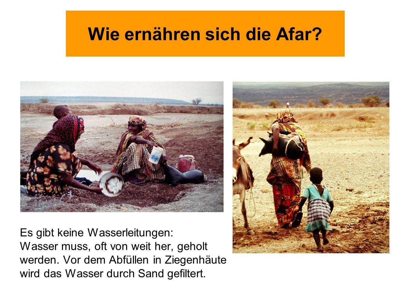 Wie ernähren sich die Afar? Es gibt keine Wasserleitungen: Wasser muss, oft von weit her, geholt werden. Vor dem Abfüllen in Ziegenhäute wird das Wass