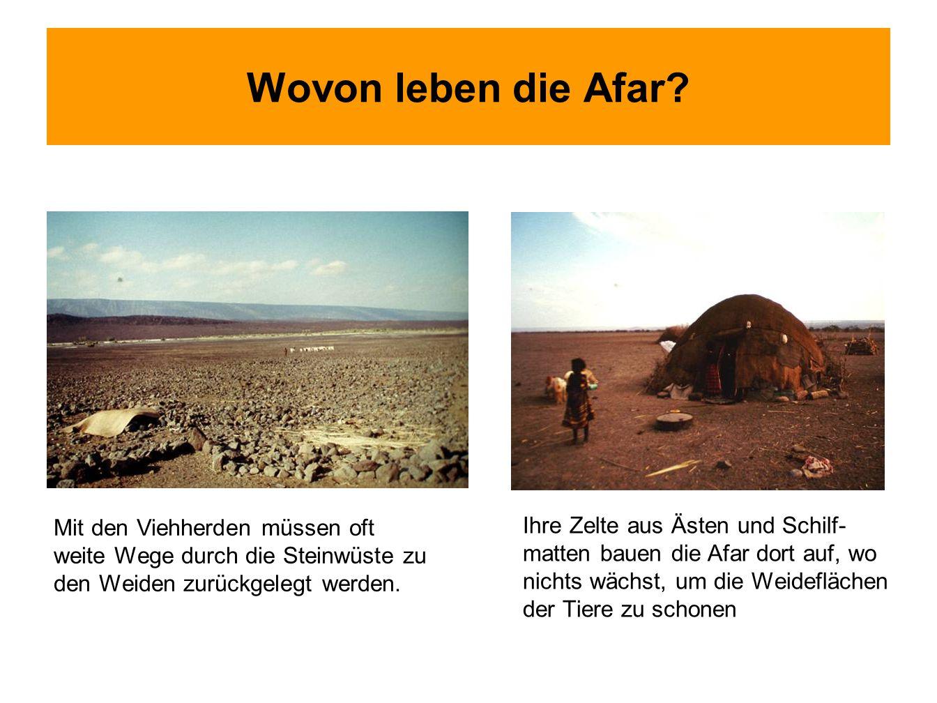 Wovon leben die Afar? Mit den Viehherden müssen oft weite Wege durch die Steinwüste zu den Weiden zurückgelegt werden. Ihre Zelte aus Ästen und Schilf