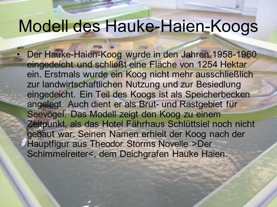 Modell des Hauke-Haien-Koogs Der Hauke-Haien-Koog wurde in den Jahren 1958-1960 eingedeicht und schließt eine Fläche von 1254 Hektar ein. Erstmals wur