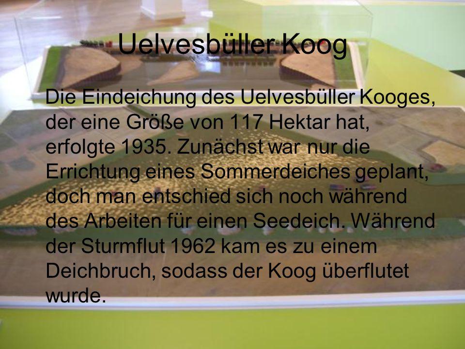 Uelvesbüller Koog Die Eindeichung des Uelvesbüller Kooges, der eine Größe von 117 Hektar hat, erfolgte 1935. Zunächst war nur die Errichtung eines Som