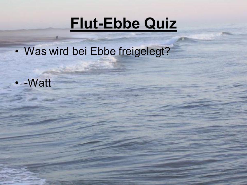 Flut-Ebbe Quiz Was wird bei Ebbe freigelegt? -Watt