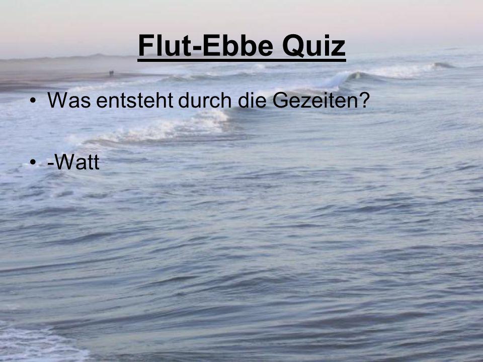 Flut-Ebbe Quiz Was entsteht durch die Gezeiten? -Watt