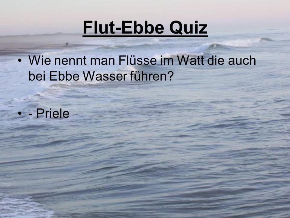 Flut-Ebbe Quiz Wie nennt man Flüsse im Watt die auch bei Ebbe Wasser führen? - Priele