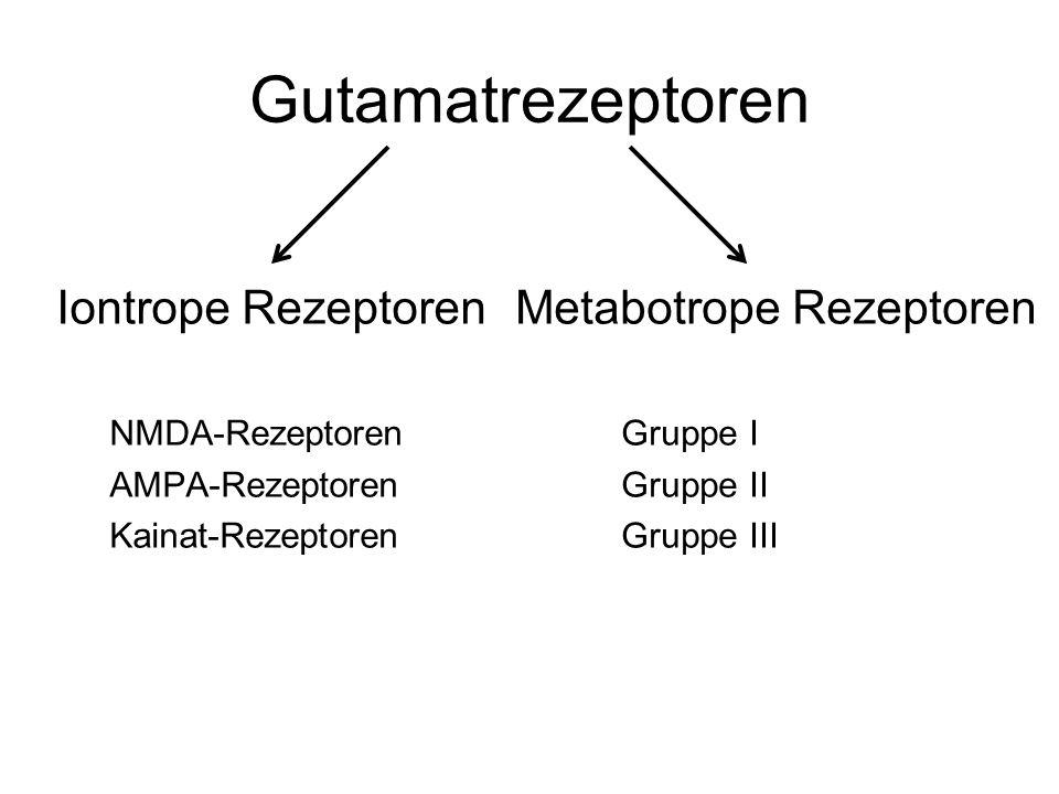 Gutamatrezeptoren Iontrope Rezeptoren NMDA-Rezeptoren AMPA-Rezeptoren Kainat-Rezeptoren Metabotrope Rezeptoren Gruppe I Gruppe II Gruppe III