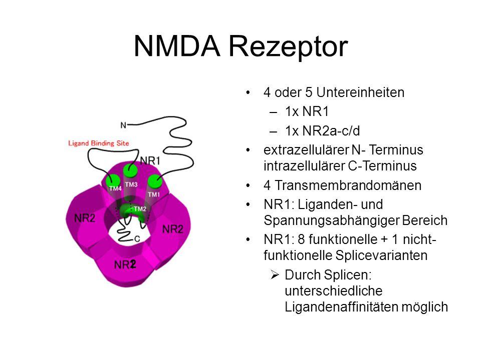 2 NMDA Rezeptor 4 oder 5 Untereinheiten –1x NR1 –1x NR2a-c/d extrazellulärer N- Terminus intrazellulärer C-Terminus 4 Transmembrandomänen NR1: Liganden- und Spannungsabhängiger Bereich NR1: 8 funktionelle + 1 nicht- funktionelle Splicevarianten  Durch Splicen: unterschiedliche Ligandenaffinitäten möglich