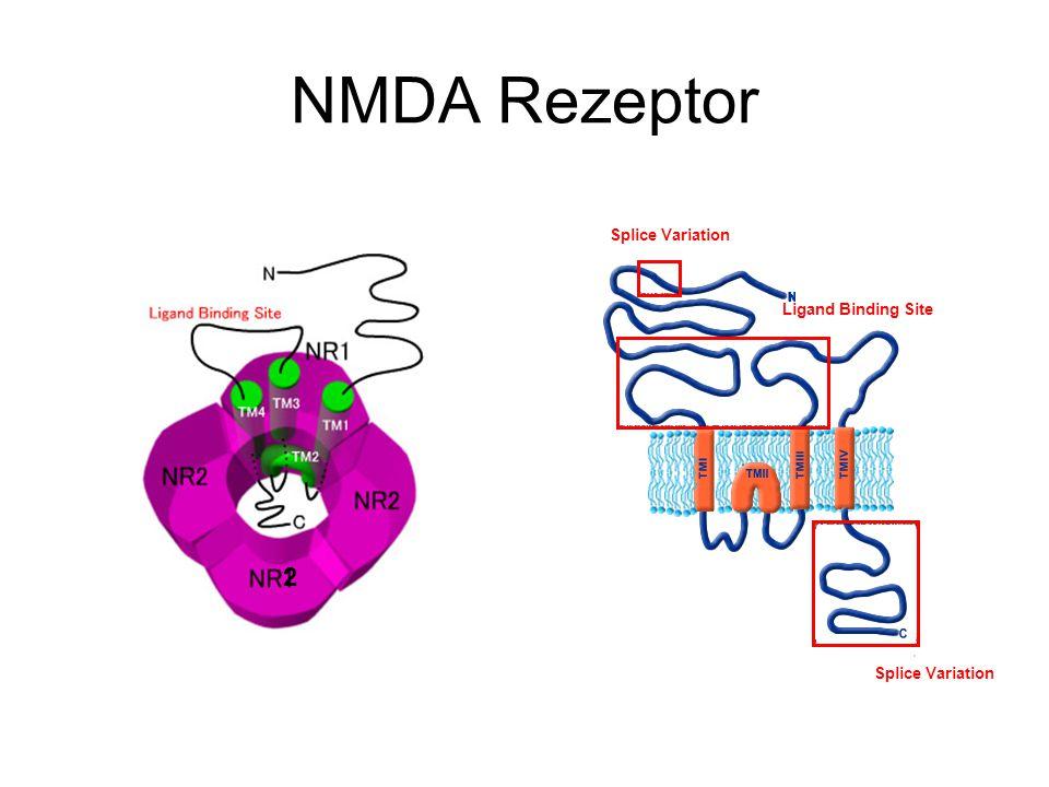 2 NMDA Rezeptor Ligand Binding Site Splice Variation