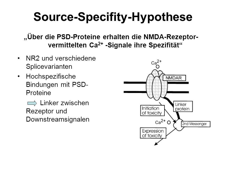"""Source-Specifity-Hypothese NR2 und verschiedene Splicevarianten Hochspezifische Bindungen mit PSD- Proteine Linker zwischen Rezeptor und Downstreamsignalen """"Über die PSD-Proteine erhalten die NMDA-Rezeptor- vermittelten Ca 2+ -Signale ihre Spezifität"""