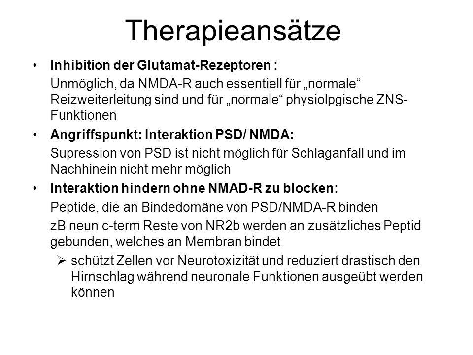 """Therapieansätze Inhibition der Glutamat-Rezeptoren : Unmöglich, da NMDA-R auch essentiell für """"normale Reizweiterleitung sind und für """"normale physiolpgische ZNS- Funktionen Angriffspunkt: Interaktion PSD/ NMDA: Supression von PSD ist nicht möglich für Schlaganfall und im Nachhinein nicht mehr möglich Interaktion hindern ohne NMAD-R zu blocken: Peptide, die an Bindedomäne von PSD/NMDA-R binden zB neun c-term Reste von NR2b werden an zusätzliches Peptid gebunden, welches an Membran bindet  schützt Zellen vor Neurotoxizität und reduziert drastisch den Hirnschlag während neuronale Funktionen ausgeübt werden können"""