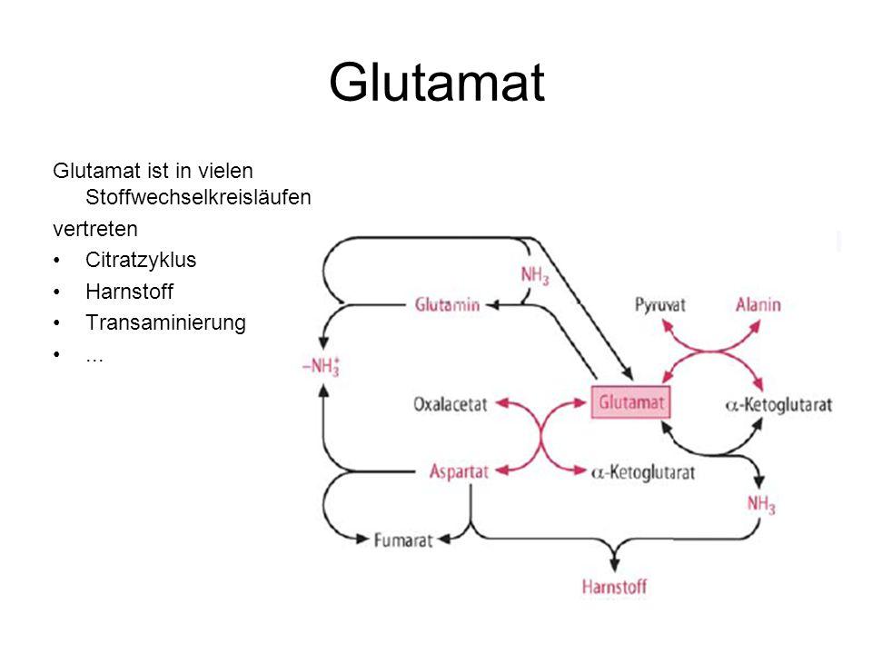 Glutamat Glutamat ist in vielen Stoffwechselkreisläufen vertreten Citratzyklus Harnstoff Transaminierung...