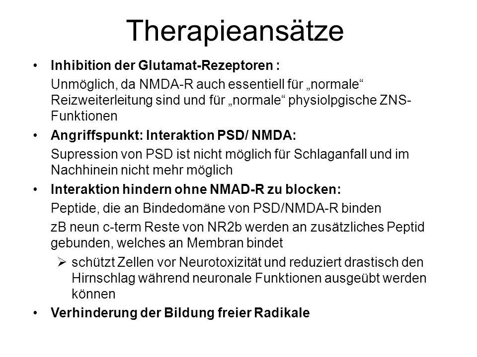 """Therapieansätze Inhibition der Glutamat-Rezeptoren : Unmöglich, da NMDA-R auch essentiell für """"normale Reizweiterleitung sind und für """"normale physiolpgische ZNS- Funktionen Angriffspunkt: Interaktion PSD/ NMDA: Supression von PSD ist nicht möglich für Schlaganfall und im Nachhinein nicht mehr möglich Interaktion hindern ohne NMAD-R zu blocken: Peptide, die an Bindedomäne von PSD/NMDA-R binden zB neun c-term Reste von NR2b werden an zusätzliches Peptid gebunden, welches an Membran bindet  schützt Zellen vor Neurotoxizität und reduziert drastisch den Hirnschlag während neuronale Funktionen ausgeübt werden können Verhinderung der Bildung freier Radikale"""