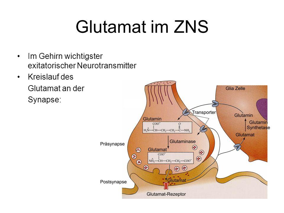 Glutamat im ZNS Im Gehirn wichtigster exitatorischer Neurotransmitter Kreislauf des Glutamat an der Synapse: