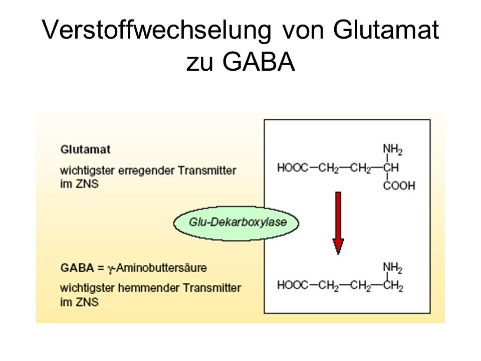 Ursachen der Glutamatüberflutung Nicht ausreichend Energie in Form von Sauerstoff und Glukose vorhanden –Keine ATP-Synthese –Der Ionengradient kann nicht aufrecht erhalten werden –Depolarisierung der Zelle –Spannungsabhängige Kanäle werden aktiviert und Glutamat in extrazellulären Raum sezerniert – [Glu] im synaptischen Spalt