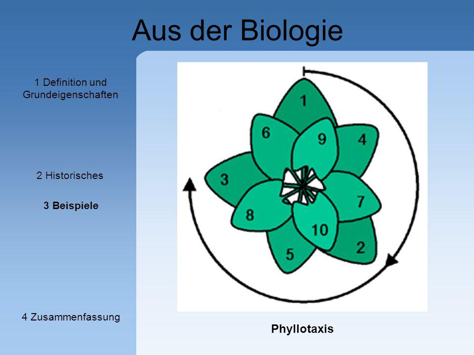 Aus der Biologie Phyllotaxis 1 Definition und Grundeigenschaften 2 Historisches 3 Beispiele 4 Zusammenfassung