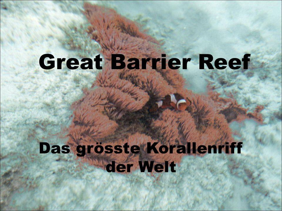 Eigenschaft des Korallenriffs: Vielfältiger Lebensraum unter und über Wasser Viele Fische Schöne Formen und Farben Küstennah, Wellenbrecher Folgen.