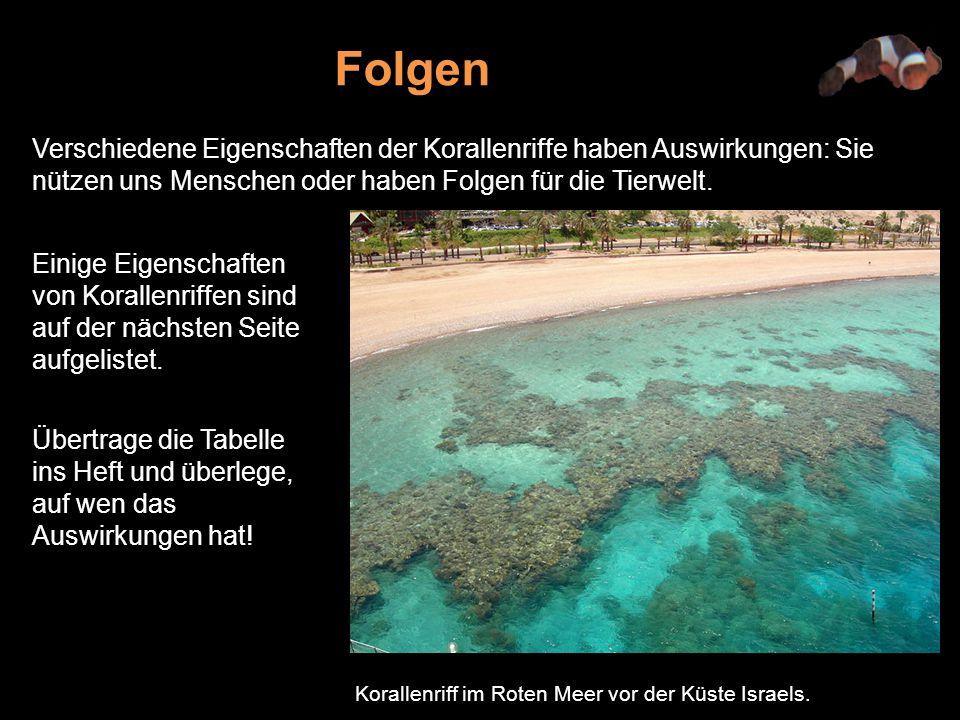 Verschiedene Eigenschaften der Korallenriffe haben Auswirkungen: Sie nützen uns Menschen oder haben Folgen für die Tierwelt.