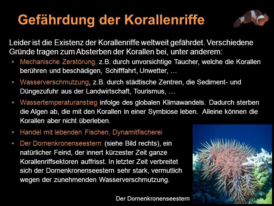 Leider ist die Existenz der Korallenriffe weltweit gefährdet.