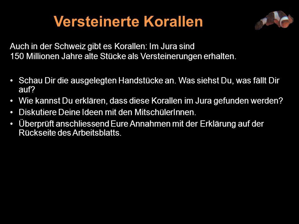Auch in der Schweiz gibt es Korallen: Im Jura sind 150 Millionen Jahre alte Stücke als Versteinerungen erhalten.