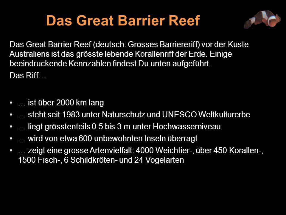 Das Great Barrier Reef (deutsch: Grosses Barriereriff) vor der Küste Australiens ist das grösste lebende Korallenriff der Erde.