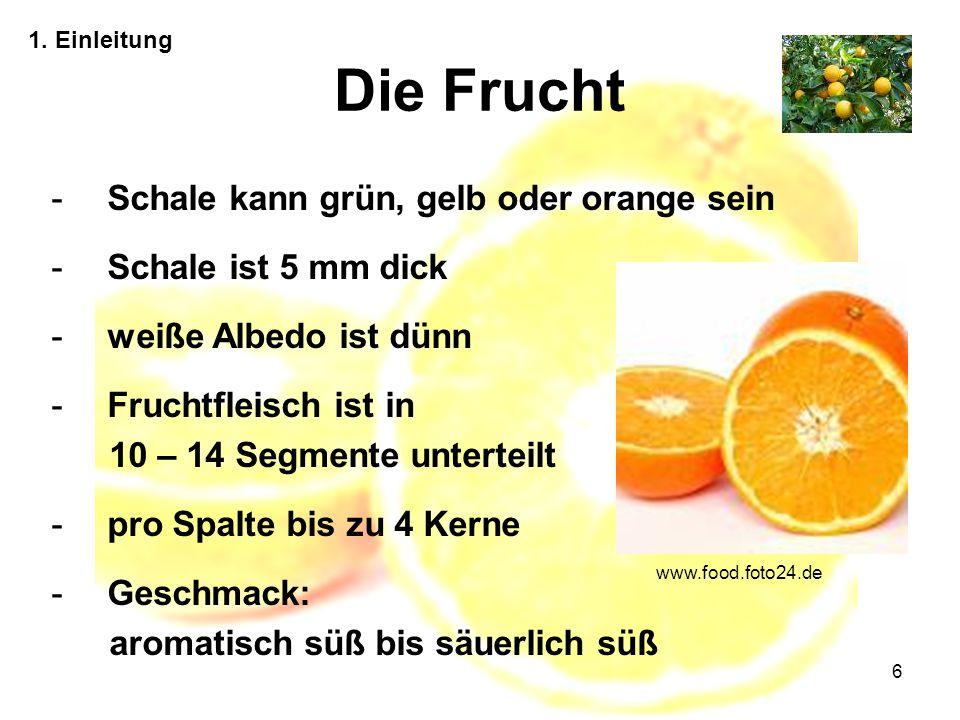 6 Die Frucht 1. Einleitung -Schale kann grün, gelb oder orange sein -Schale ist 5 mm dick -weiße Albedo ist dünn -Fruchtfleisch ist in 10 – 14 Segment