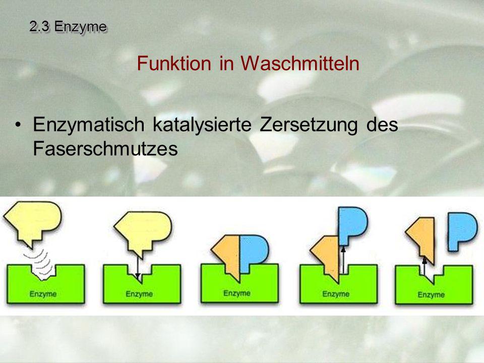 2.3 Enzyme Enzymatisch katalysierte Zersetzung des Faserschmutzes Funktion in Waschmitteln