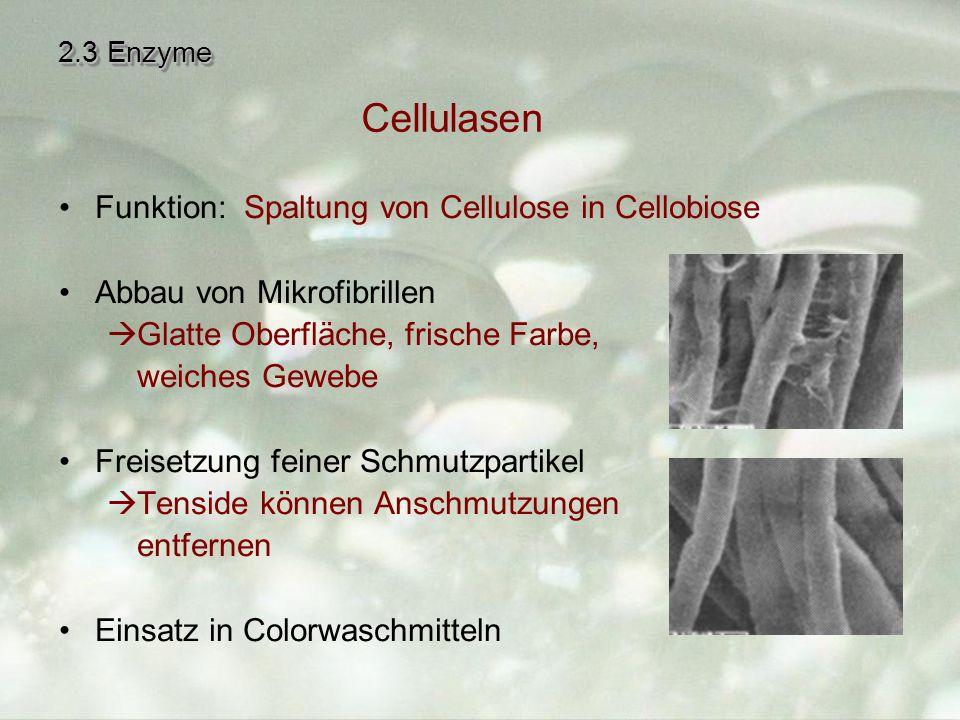 2.3 Enzyme Funktion: Spaltung von Cellulose in Cellobiose Abbau von Mikrofibrillen  Glatte Oberfläche, frische Farbe, weiches Gewebe Freisetzung feiner Schmutzpartikel  Tenside können Anschmutzungen entfernen Einsatz in Colorwaschmitteln Cellulasen