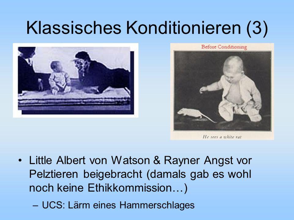 Klassisches Konditionieren (3) Little Albert von Watson & Rayner Angst vor Pelztieren beigebracht (damals gab es wohl noch keine Ethikkommission…) –UCS: Lärm eines Hammerschlages