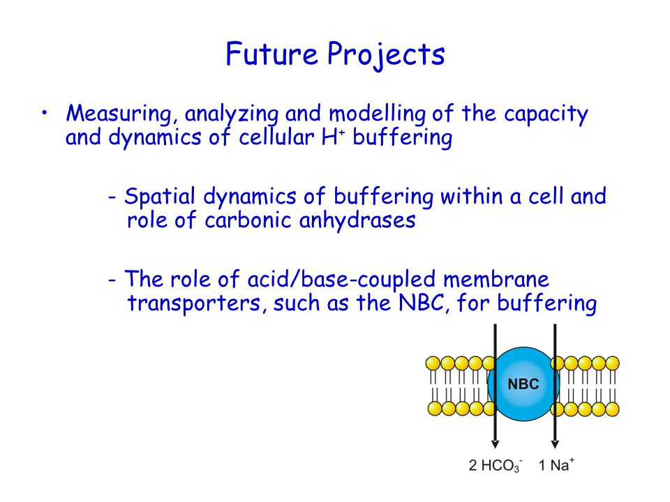Future Projects Measuring, analyzing and modelling of the capacity and dynamics of cellular H + buffering - Spatial dynamics of buffering within a cel