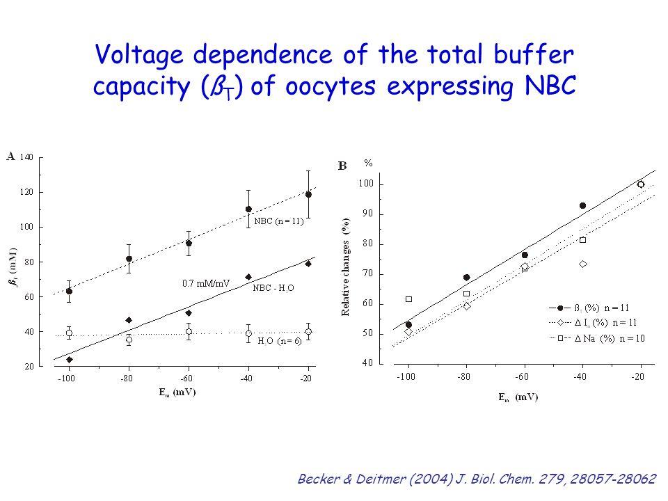 Voltage dependence of the total buffer capacity (ß T ) of oocytes expressing NBC Becker & Deitmer (2004) J.