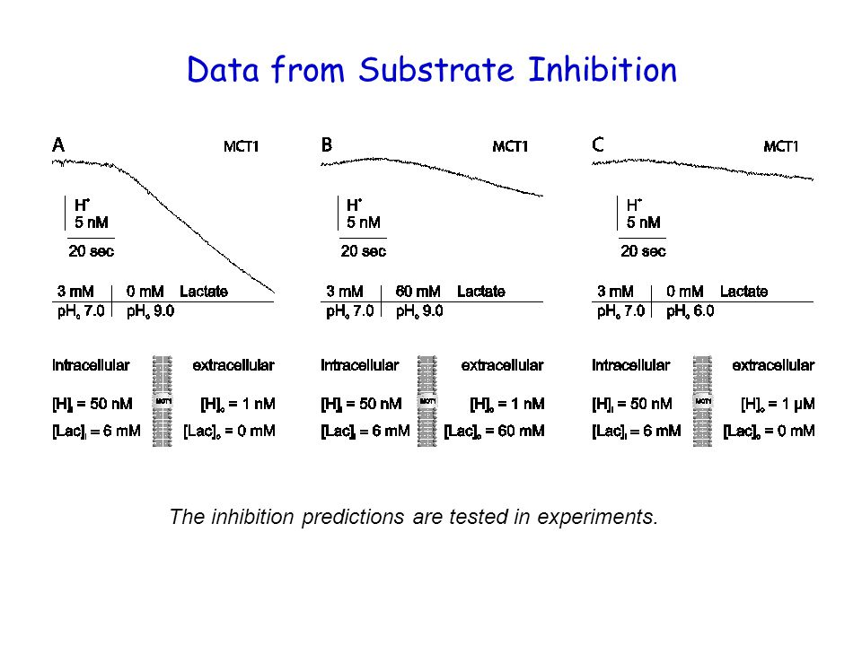 Data from Substrate Inhibition The inhibition predictions are tested in experiments.