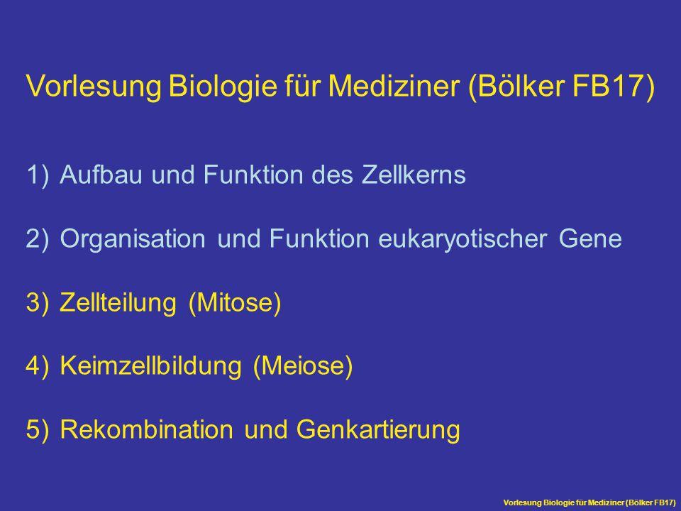 Vorlesung Biologie für Mediziner (Bölker FB17) Meiose Bei der Keimzellbildung kommt es in der Meiose zu einer Reduktion der Chromosomensätze Die Meiose besteht aus einer Reduktionsteilung (Meiose I) und einer anschließenden Mitose (Meiose II) Aus einer diploiden Ausgangszelle entstehen vier haploide Keimzellen