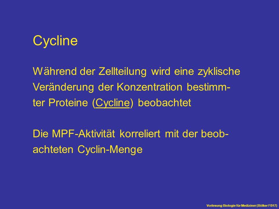 Vorlesung Biologie für Mediziner (Bölker FB17) Cycline Während der Zellteilung wird eine zyklische Veränderung der Konzentration bestimm- ter Proteine