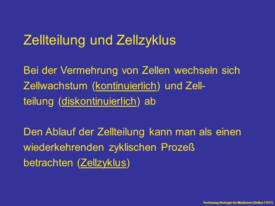 Vorlesung Biologie für Mediziner (Bölker FB17) Aufbau des Spindelapparates